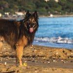 Quelles sont les plages autorisées pour les chiens dans la région de Guérande ?